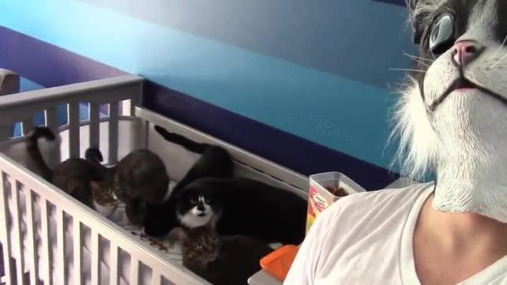 Enlace a Los gatos tienen pánico de las personas con máscaras de gato