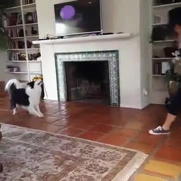 Enlace a Un perro ha aprendido que no merece la pena morder un globo. Es más divertido jugar con ellos