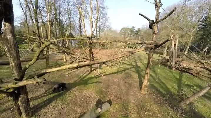 Enlace a Chimpancé VS Drones. La batalla ha comenzado
