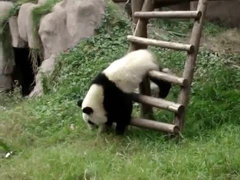 Enlace a Vete a casa señor panda, estás borracho