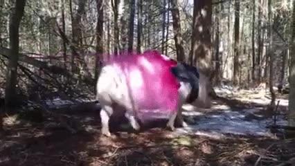 Enlace a Paseando por el bosque cuando de repente...