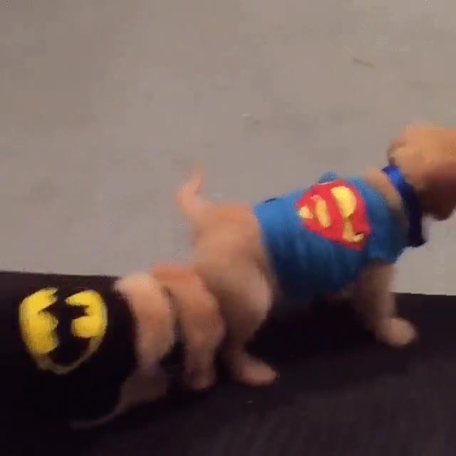 Enlace a La película de  Superman vs Batman interpretada por perros