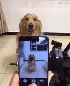 Enlace a ¿Acaba de sonreír a cámara?