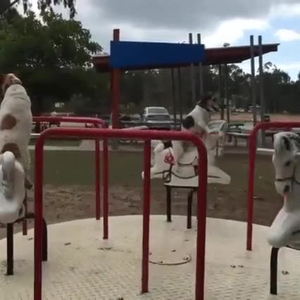 Enlace a Los perros saben cómo pasarlo bien en el parque
