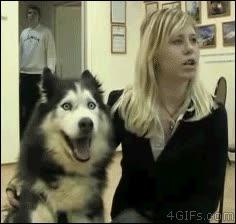 Enlace a Perros entusiasmados con las entrevistas