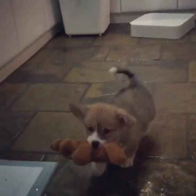 Enlace a Un perro que se lleva a su peluche a todas partes