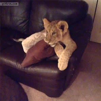 Enlace a Cachorros de león enganchados a Dora la Exploradora