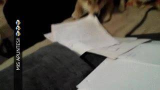 Enlace a La excusa del perro que se ha comido tus deberes se convierte en realidad
