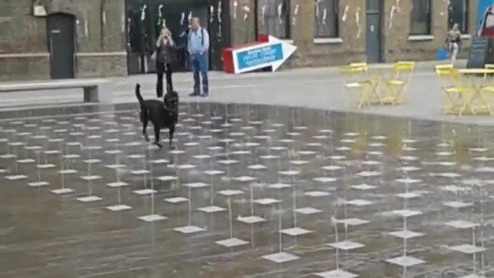 Enlace a A este perro solo le hace falta una fuente para ser feliz