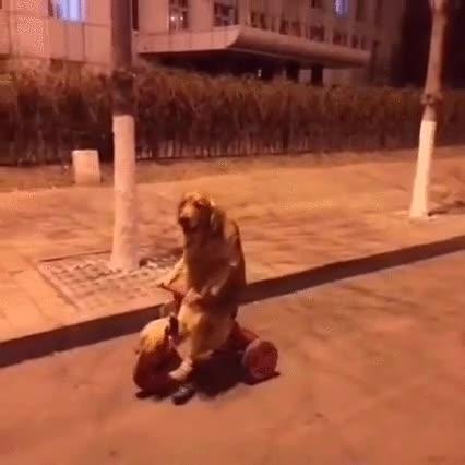 Enlace a Cuando pillas a tu perro volviendo a casa en triciclo a las tantas de la noche