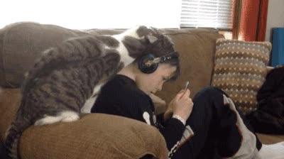 Enlace a Gatos intentado llamar la atención de cualquier manera