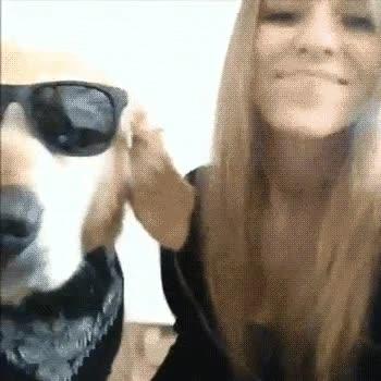 Enlace a Dicen que los perros acaban pareciéndose a sus dueños. ¿O es al revés?
