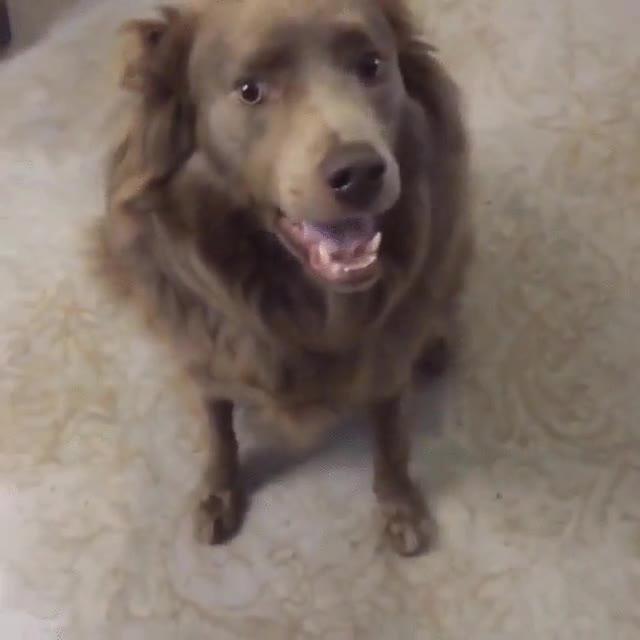 Enlace a Lo que pasa cuando le haces creer a tu perro que se va de paseo