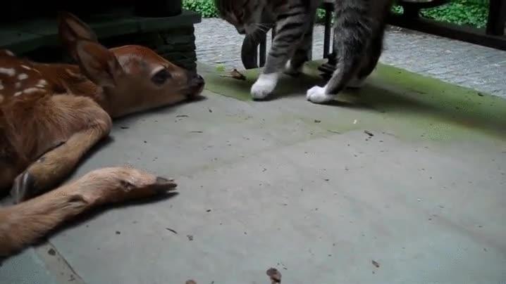 Enlace a A Bambi le da igual todo ya