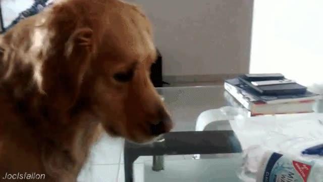 Enlace a Perros enfadados con la vida que deciden tomarla con una pobre botella
