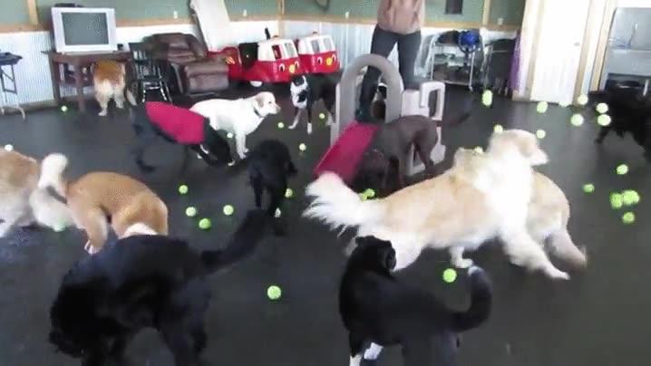 Enlace a El paraíso de los perros