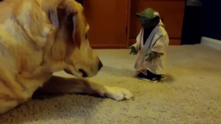 Enlace a Un perro ha sido despertado por el mismísimo Yoda pero no parece muy impresionado