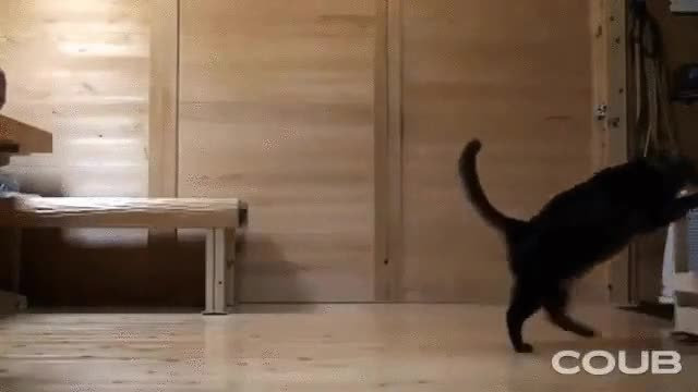 Enlace a Gatos que también ayudan con las tareas del hogar