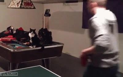Enlace a Gatos que te ayudan cuando juegas una partida de ping pong