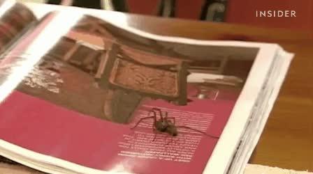 Enlace a Con este invento ya no tendrás que llamar a tu padre para que libre de las arañas