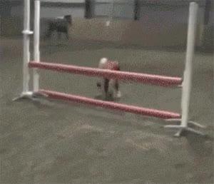 Enlace a Esta chica dice que es capaz de saltar como un caballo