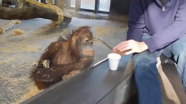 Enlace a Mono reaccionando a un truco de magia