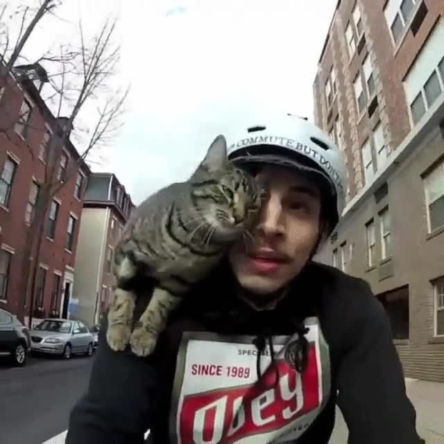 Enlace a Este gato adora ir en bici con su dueño