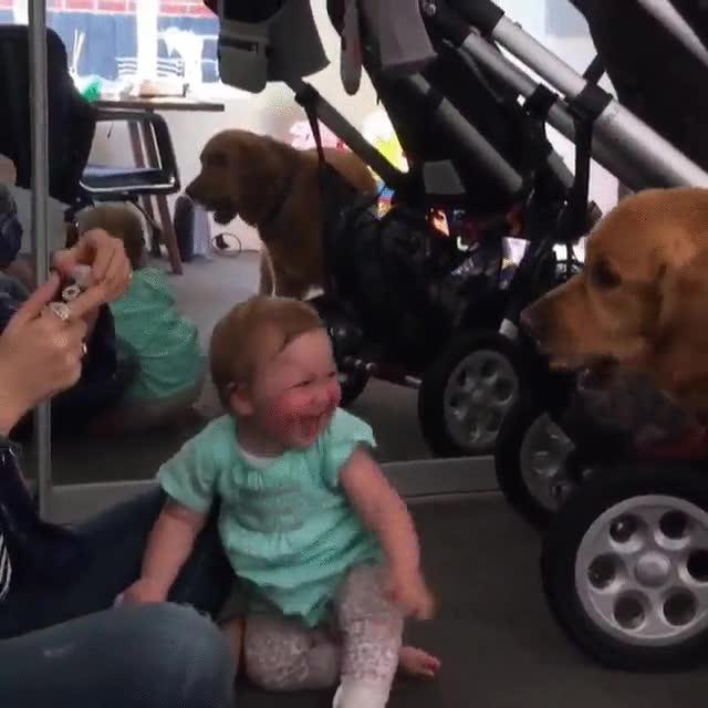 Enlace a No hay nada más gracioso que un perro mordiendo burbujas