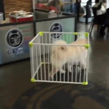 Enlace a Una simple jaula no puede contener los sueños de este perro