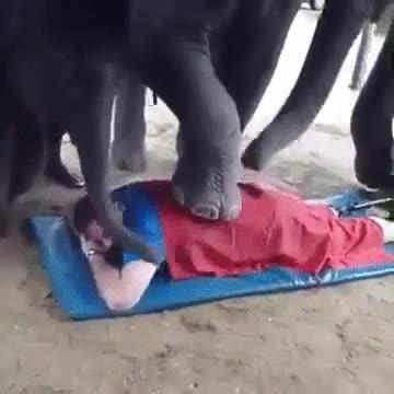 Enlace a No hay nada como recibir un masaje de elefantes. Te quedas como nuevo