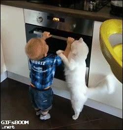 Enlace a Y el premio a gato del año es para...