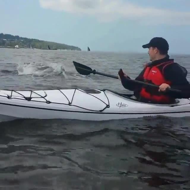 Enlace a Cuando vas tranquilo con tu Kayak cuando...