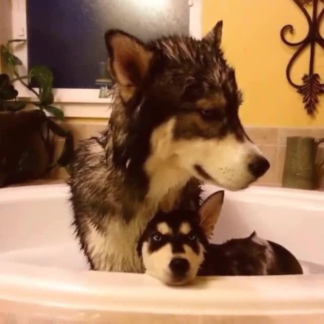 Enlace a Humano, no nos gustan los baños. No nos gustan ni un pelo