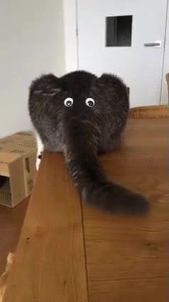 Enlace a Gatos obsesionados con parecer elefantes. Alguien tendría que darle una charla