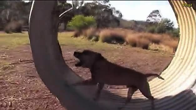 Enlace a Perros que ya saben lo que siente un hámster corriendo