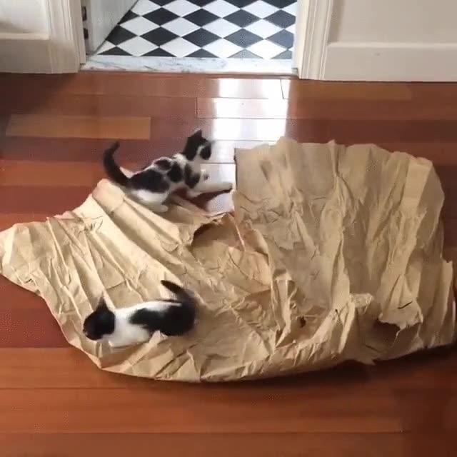 Enlace a El mejor regalo que puedes hacerle a tus gatos