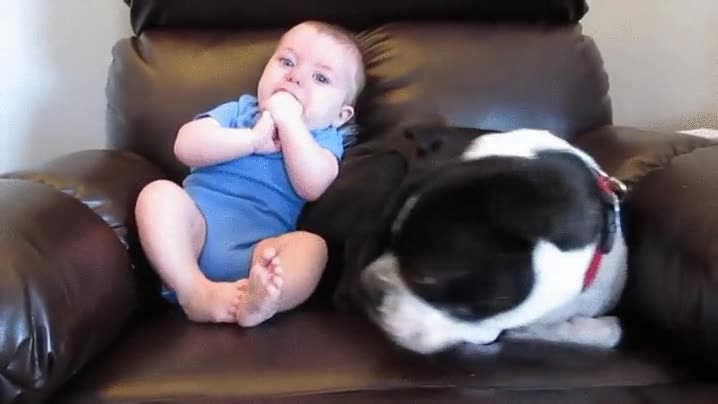 Enlace a Perro que se da a la fuga cuando un bebé decide hacer sus necesidades