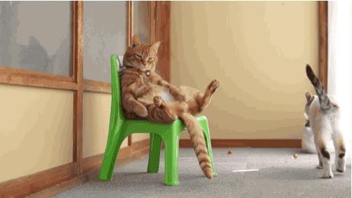 Enlace a La película de El Padrino, escenificada por gatos