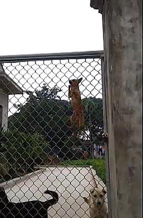 Enlace a Perros que se niegan a ser prisioneros