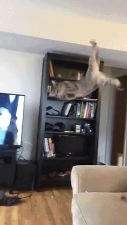 Enlace a Gato ninja con una agilidad fuera de lo normal