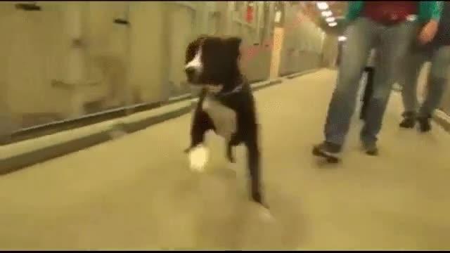 Enlace a La sensación de felicidad de un perro adoptado
