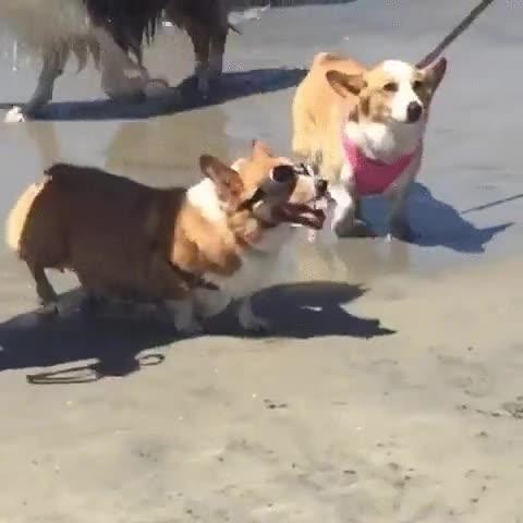 Enlace a Uno de los perros más chulos que has visto nunca