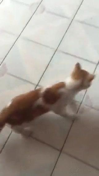 Enlace a Los gatos de hoy en día no son como los de antes