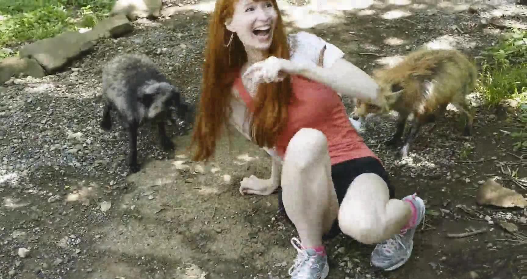 Enlace a La verdad es que esos zorros no parecen muy amigables