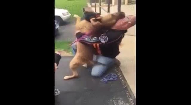 Enlace a Un perro se reencuentra con su amo dos años más tarde