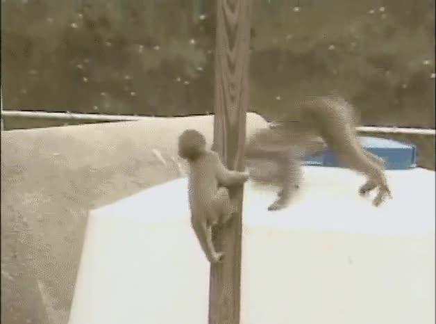 Enlace a El mono de atrás representa mi éxito en la vida
