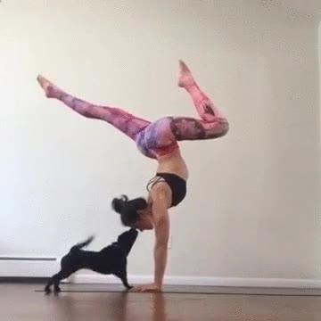 Enlace a Cuando tu perro te trollea esas posturas tan raras que haces