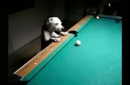 Enlace a Perros con un enorme potencial para el billar
