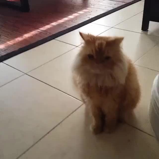 Enlace a Cuando llegas a casa y tus gatos están actuando de forma extraña