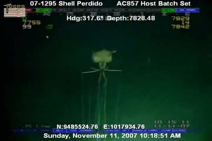 Enlace a El fondo del mar está lleno de criaturas terroríficas